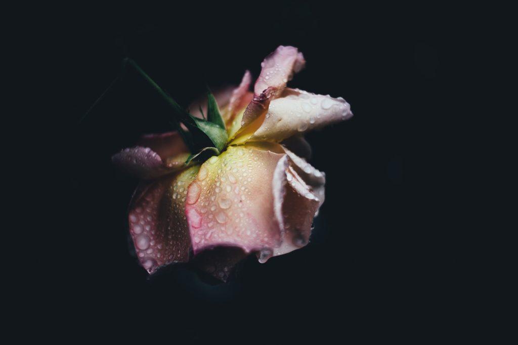 Dark Flowers Image