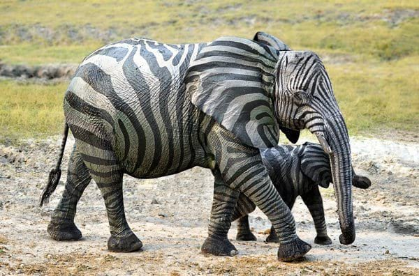 Elephant Zebra Hybrid Image